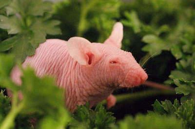 Dyr i zealand farlige new De største